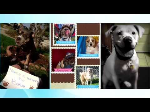 Allegheny County PA Dog License Information