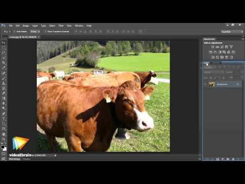 Photoshop CS6 Image Optimization Workshop Trailer
