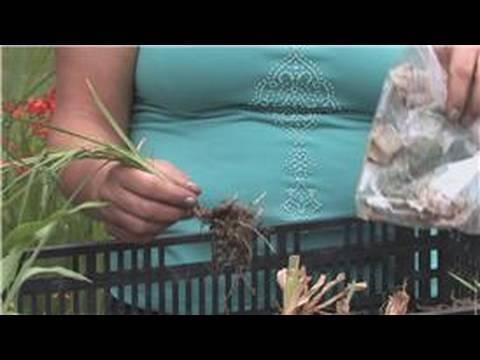 Flower Bulbs : How to Store Iris Bulbs