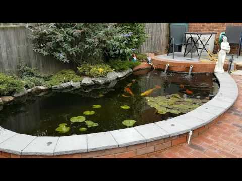 Winter And My Pond