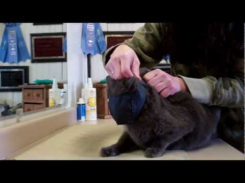 Cat Handling for grooming
