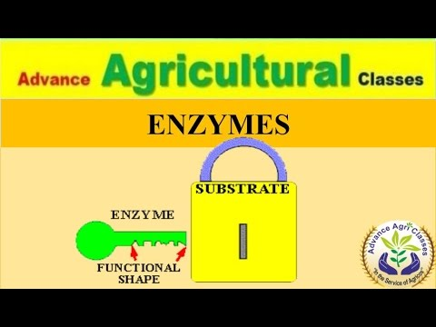 ENZYMES (Hindi/English) Agricultural Field Officer IBPS