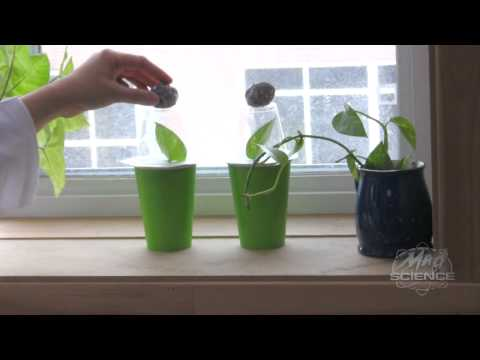 Plant Perspiration Experiment - Mad Science of West New Jersey