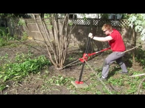 Using Mechanical Advantage to Remove a Stubborn Tree