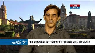 Fall Army Worm infestation in several provinces Part 2