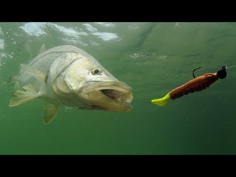 Snook Fishing: How To Catch Snook In The Summer