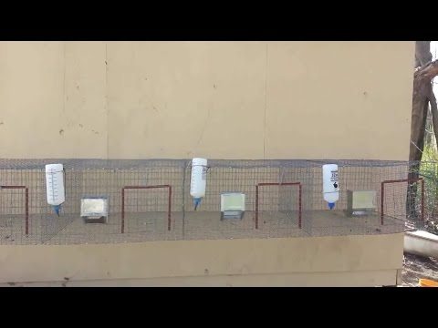 Making a hanging rabbit hutch with wire and j clips