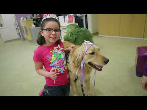 The New Dog: Bindi joins the University of Michigan therapy dog team