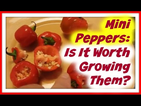 Mini Bell Peppers - Is It Even Worth Growing Mini Red Bell Peppers?