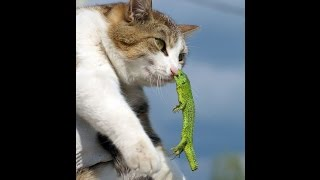 Funny Cats Compilation 2017 - Best Funny Cat Videos Ever -Amazing Funny Vines