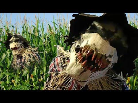 Creepy Scarecrow Sighting