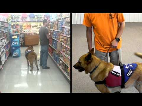 On Command Canine Training Center / PTSD Service Dog