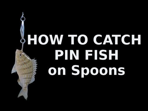 Catch Pin Fish With Lures-How To Catch Them On Spoons