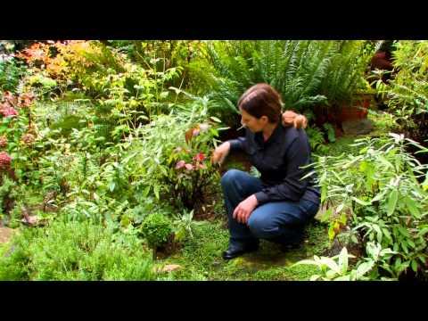 How do I Garden on a Sloped Yard?