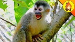 CHOMPED by a Tiny Monkey!