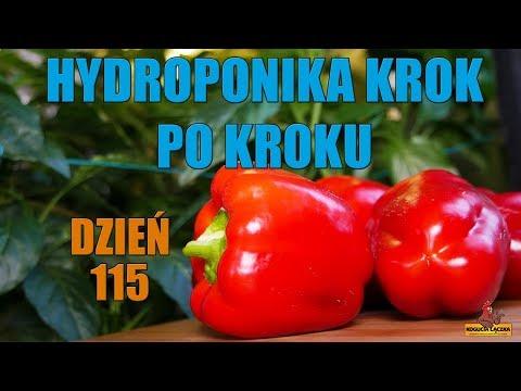 Hydroponika Krok po Kroku #7 DZIEŃ 115