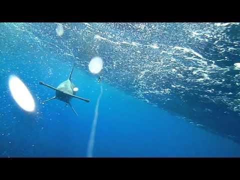 Gold Coast Hammerhead Shark caught on Waterwolf camera