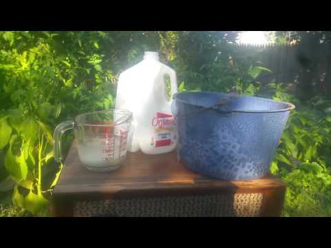 How to make your own EM1 effective microbes lactate bacteria for soil and bokashi
