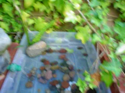 How to make a cheap pond for under 5 dollars