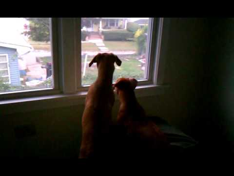 Puppies looking out a window