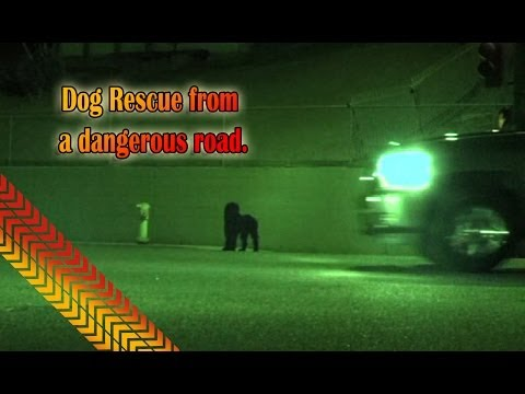 Dog Rescue From a Dangerous Road.  Link for MOBILE users - below.