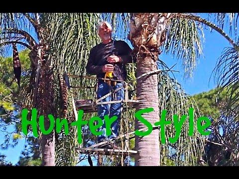 Redneck Palm Tree Trimming