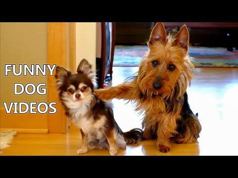*Try Not To Laugh Challenge* Funny Dogs Compilation - Funniest Dog Videos 2017