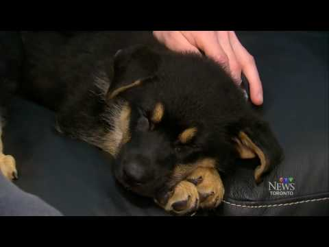 Toronto man spends US$80,000 to clone his dead dog