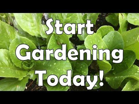 Start Gardening Today!