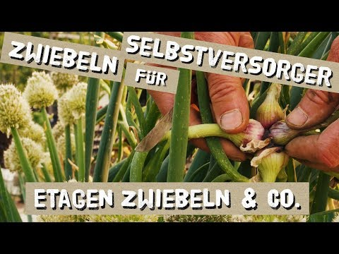 Zwiebeln für Selbstversorger - Etagenzwiebeln, Winterheckenzwiebeln und Mehr
