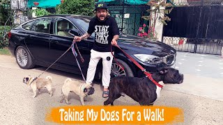 Taking My Dogs For a Walk!