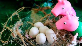 Peppa Pig e Pig George Episodios Completos em Portugues Brasil - Peppa Pig 2016 Portugues Brasil