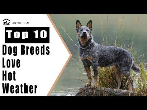 Xxx Mp4 Top 10 Dog Breeds That Love Hot Weather 3gp Sex