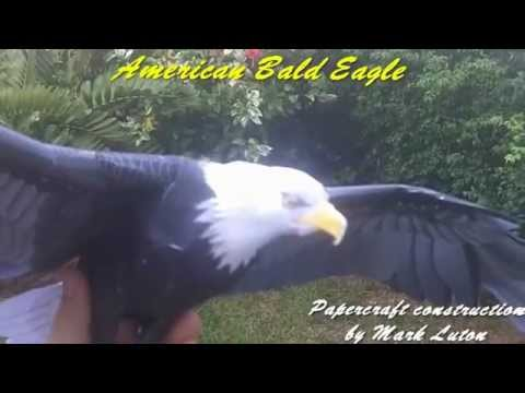 My Second ever Papercraft model - American Bald Eagle