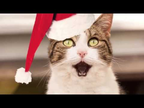 Vodafone Surprise Christmas | Christmas Experience Application