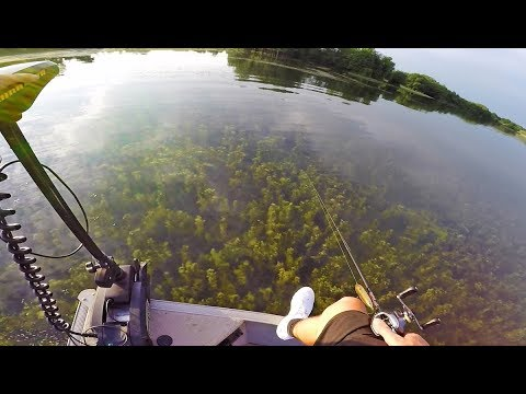 ULTRA Clear Water Fishing in Heavy Grass *Topwater Bites*