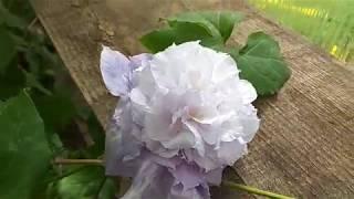 Цветочный  рай Галины и Михаила 3 июня 2018 г.