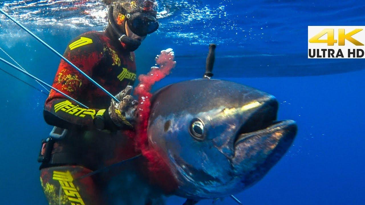 BLUEFIN TUNA Spearfishing🔪CATCH CLEAN COOK  Spearfishing Life 🇬🇷 [4Κ]✅