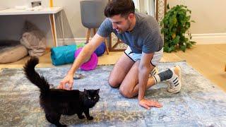 Boyfriend Meets My Pregnant Cat!