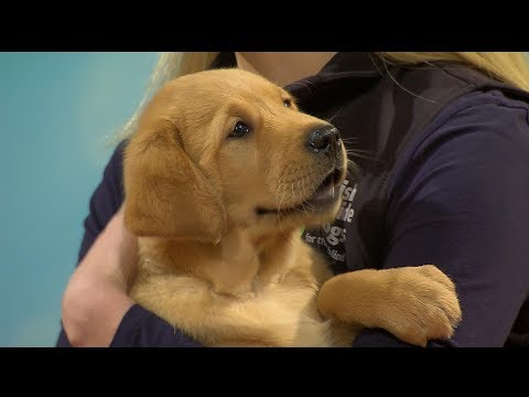 RTE Today Show Guide Dog Puppy