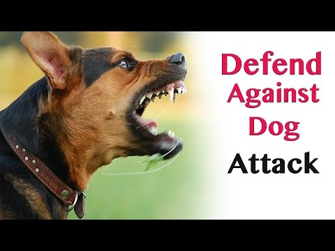 Defend against dog attack - self defence