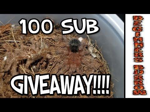 100 Sub Tarantula Giveaway