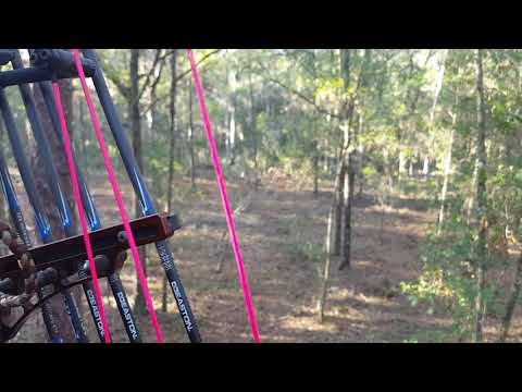 Public land bow hunt. Just does.