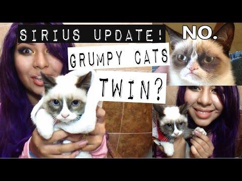 HUGE Sirius update! (grumpy cats twin?)