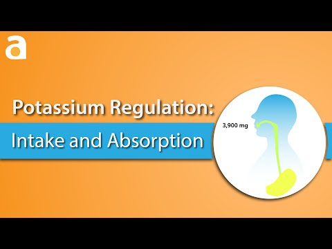 Potassium Regulation: Intake and Absorption