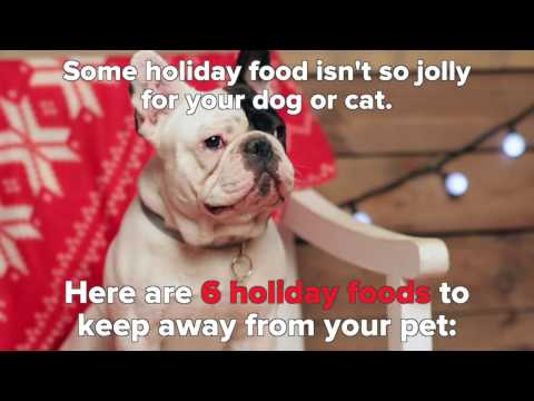 6 Holiday Foods That Can Harm Pets