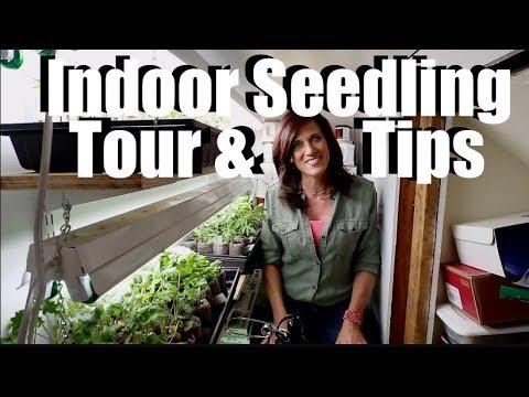 Indoor Seedling Tour & Tips // Spring Garden Series #7
