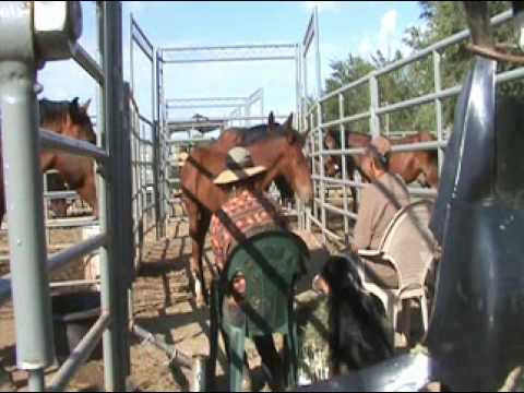 How to Tame Wild Horses the Old Lady Way