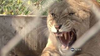 Exotic Animals Being Kept as Pets