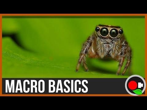 An Intro to Macro Filmmaking: Macro Basics
